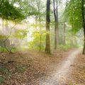 Zonbeschenen bospad. Sfeerbeeld bij het blog: Je ideaalbeeld en hoe je omgaat met de afwijkende realiteit van coach en relatietherapeut Lisette Wevers in Amsterdam