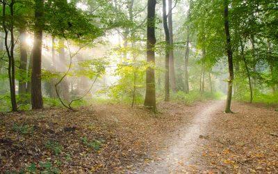 Je ideaalbeeld en hoe je omgaat met de afwijkende realiteit