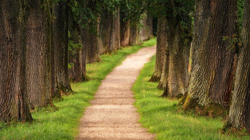 Pad  door rijen bomen. Sfeerbeeld bij het blog: Last van onzekerheid van coach en relatietherapeut Lisette Wevers in Amsterdam