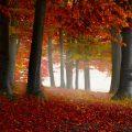 Uitzicht door bos met bomen in herfstkleuren. Sfeerbeeld bij het blog: Sluit vrede met je innerlijke criticus van coach en relatietherapeut Lisette Wevers in Amsterdam