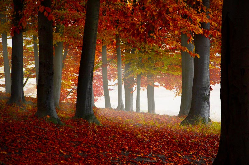 Uitzicht door bos met bomen in herfstkleuren
