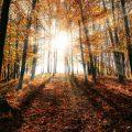 zonlicht filtert door bomen in herfstkleuren. Sfeerbeeld bij het blog: Authentiek zijn maakt gelukkiger, zo wordt je authentiek van coach en relatietherapeut Lisette Wevers in Amsterdam