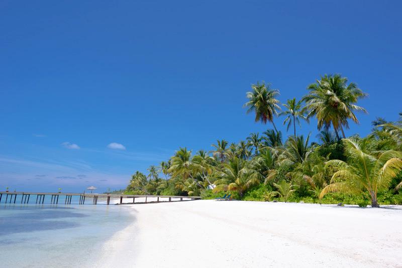 Tropisch strand met palmbomen. Sfeerbeeld bij het blog: Een mindfulness reis op sardinie van coach en relatietherapeut Lisette Wevers in Amsterdam