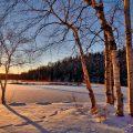 Zonsondergang over een besneeuwd veld met berken. Sfeerbeeld bij het blog: Gelukkiger worden door je liefdevolle kant te voeden van coach en relatietherapeut Lisette Wevers in Amsterdam