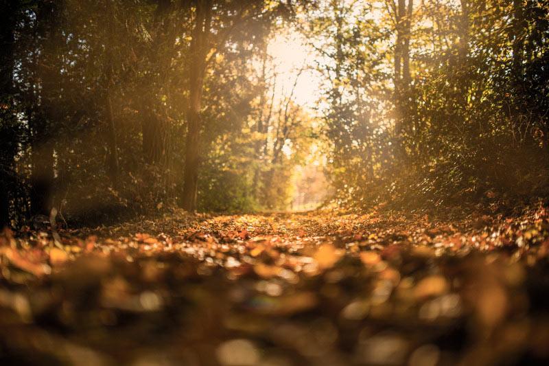 Zonbeschenen bospad met bladeren. Sfeerbeeld bij het blog: Vergroot je zelfbewustzijn van coach en relatietherapeut Lisette Wevers in Amsterdam