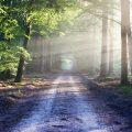 Zonbeschenen bospad. Sfeerbeeld bij het blog: Volg je eigen ritme van coach en relatietherapeut Lisette Wevers in Amsterdam