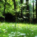 Door de zon beschenen open plek in het bos met madeliefjes. Sfeerbeeld bij het blog: Je hart volgen van coach en relatietherapeut Lisette Wevers in Amsterdam