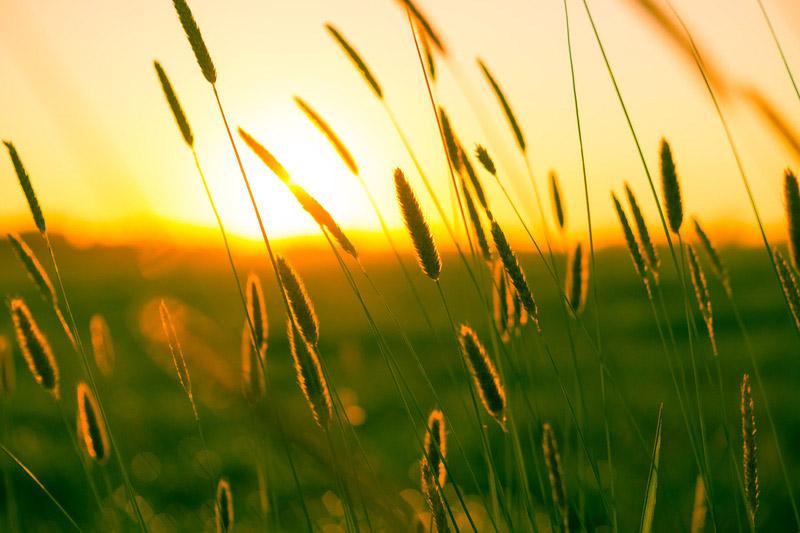 Zonsondergang met riet. Sfeerbeeld bij het blog: Ontspannen in de natuur van coach en relatietherapeut Lisette Wevers in Amsterdam