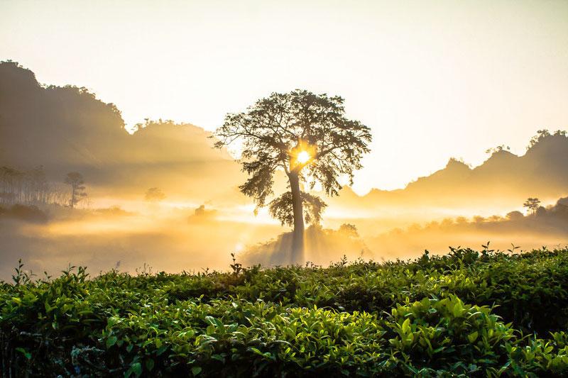 Zonsondergang over een tropisch bos. Sfeerbeeld bij het blog: Kiezen voor liefde van coach en relatietherapeut Lisette Wevers in Amsterdam