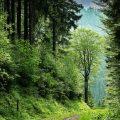 Uitzicht langs een pad door het bos. Sfeerbeeld bij het blog: Je grenzen aangeven van coach en relatietherapeut in Amsterdam Lisette Wevers