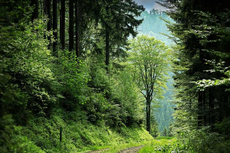 Uitzicht langs een pad door het bos. Sfeerbeeld bij een blog van coach en relatietherapeut in Amsterdam Lisette Wevers