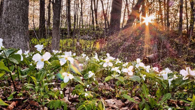 Bloeiende bosgrond met ochtendzon. Sfeerbeeld bij het blog: Loslaten is soms nodig van coach en relatietherapeut Lisette Wevers in Amsterdam