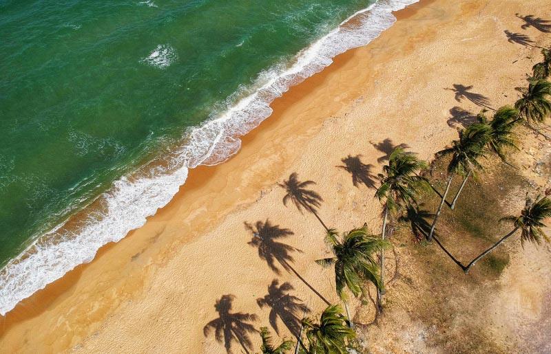 Tropisch strand met palmbomen en groene zee. Sfeerbeeld bij het blog: Boekentip de 5 kindconclusies, Lisette Schuitema. van coach en relatietherapeut Lisette Wevers in Amsterdam