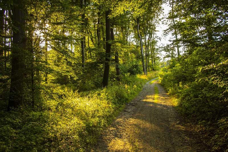 Pad door een zonbeschenen bos in de zomer