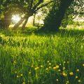 Boterbloemen in een veldje in het bos. Sfeerbeeld bij het blog: Bestaat hooggevoeligheid en wat als je hooggevoelig bent van coach en relatietherapeut Lisette Wevers in Amsterdam