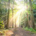Zonbeschenen bospad. Sfeerbeeld bij het blog: Kwetsbaarheid tonen is moedig van coach en relatietherapeut Lisette Wevers in Amsterdam