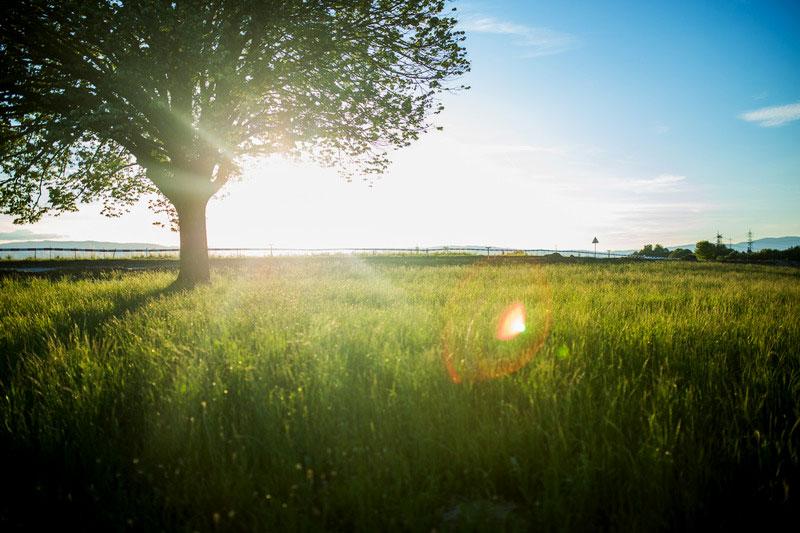 Groene boom in veld met hoog gras tijdens zonsondergang