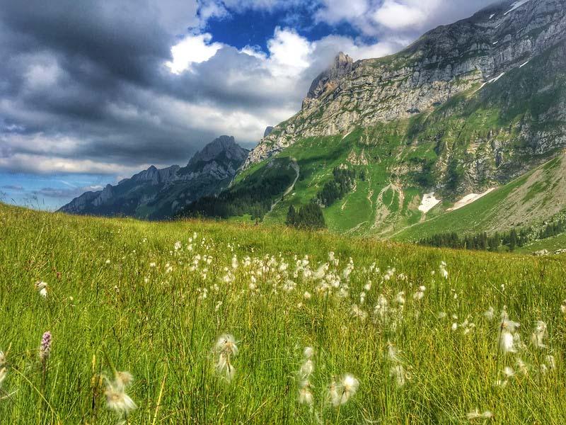 Alpenweide met paardebloemen voor eeen bergkam. Sfeerbeeld bij het blog: Gelukkig zijn, wat is daarvoor nodig? van coach en relatietherapeut Lisette Wevers in Amsterdam