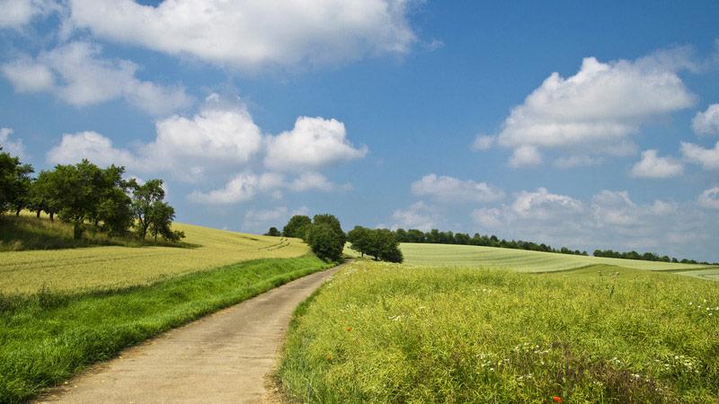 Uitzicht over groene velden vanaf een pad dat er doorheen loopt. Sfeerbeeld bij het blog: negatieve gedachten loslaten van coach en relatietherapeut in Amsterdam Lisette Wevers